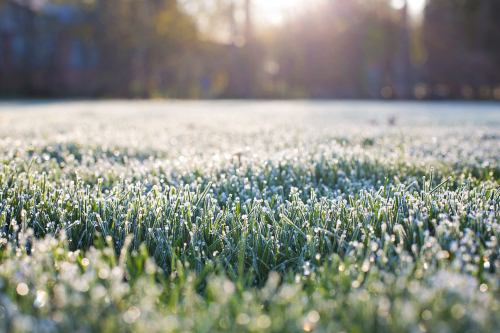 Frost-on-grass-1358926_1920